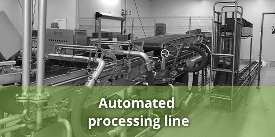 Integral automated processing line for delicate (leafy) vegetables